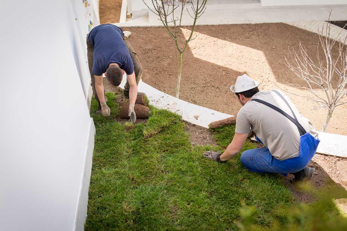 two gardening men laying new turf